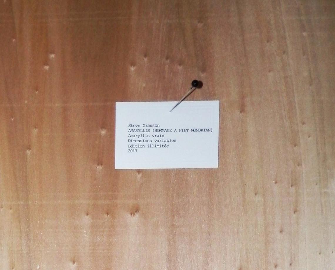 - Amaryllis (Tribute to Piet Mondrian)