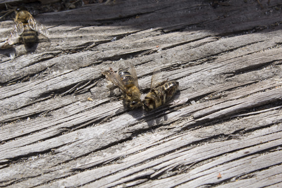 - untitled (some dead bees)